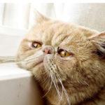 у кошки закисают глаза