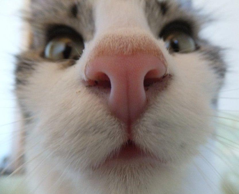Почему у кошки горячий нос