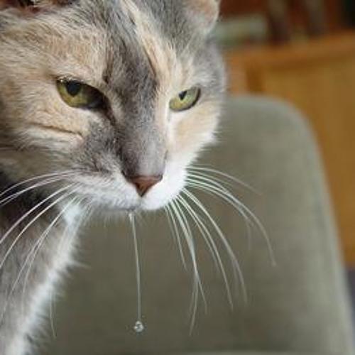 слюнявая кошачья морда