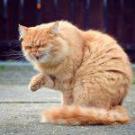рыжий кот чихает