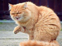 Что делать, если у кошки или кота заложен нос?
