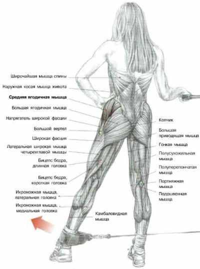 упражнение махи ногой увеличивает ягодицы