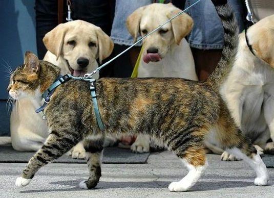 выгуливать кошку