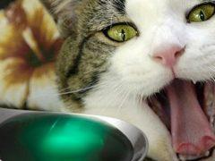 ТОП-13 витаминов для кошек, поднимающих иммунитет