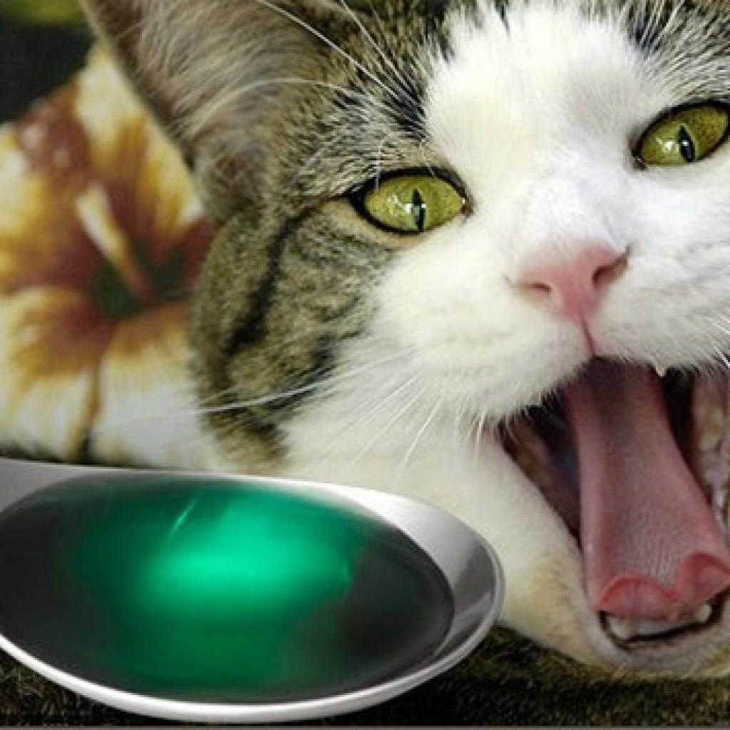 кошка и ложка лекарства