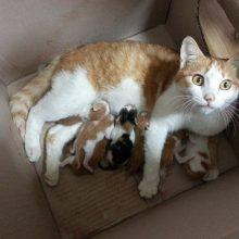 Какие выделения после родов кошки считаются нормой?