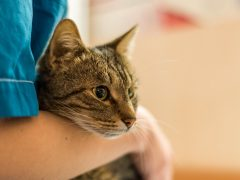 У кошки выделения: каких бояться, а какие нормальны?