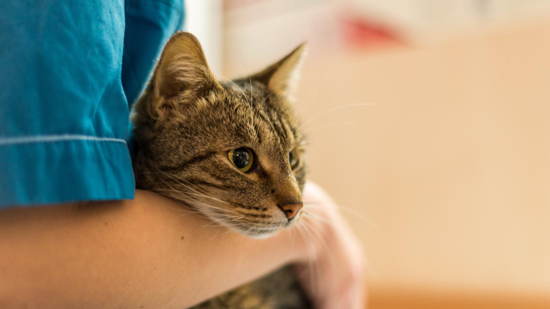 у кошки выделения должен лечить ветеринар