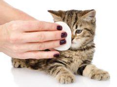 О чём говорят выделения тёмного цвета из глаз у кошки?