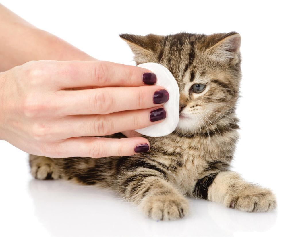 уход за глазами котенка