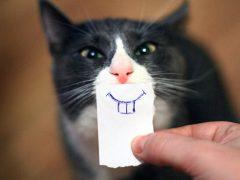 Почему может выпасть зуб у кошки?