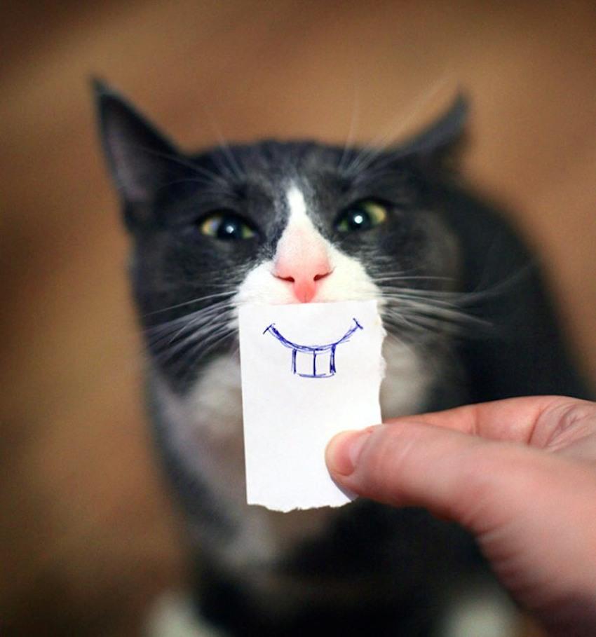 Почему у котов выпадают клыки
