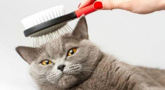 ТОП-10 витаминов, останавливающих выпадение шерсти у кошек