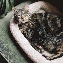 Как точно узнать, забеременела ли кошка?